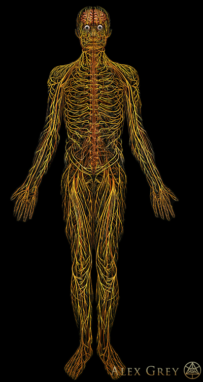 The Nervous System as depicted by artist Alex Grey